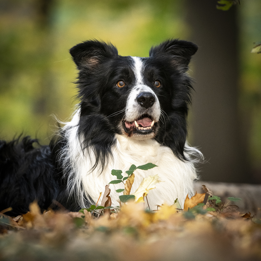 Hond 2.jpg