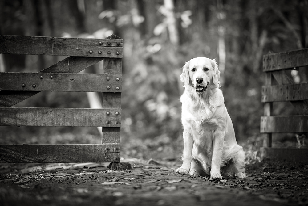 Hond 3.jpg