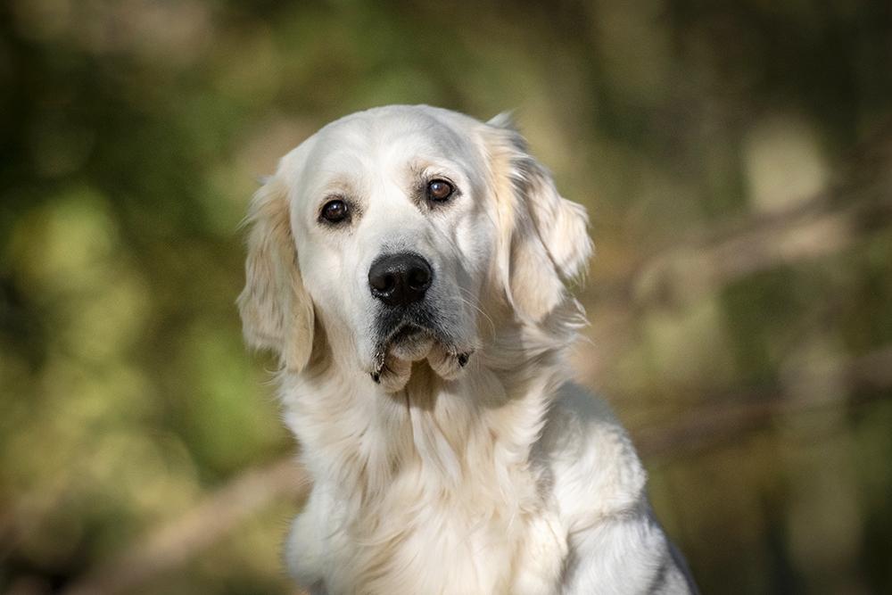Hond 4.jpg