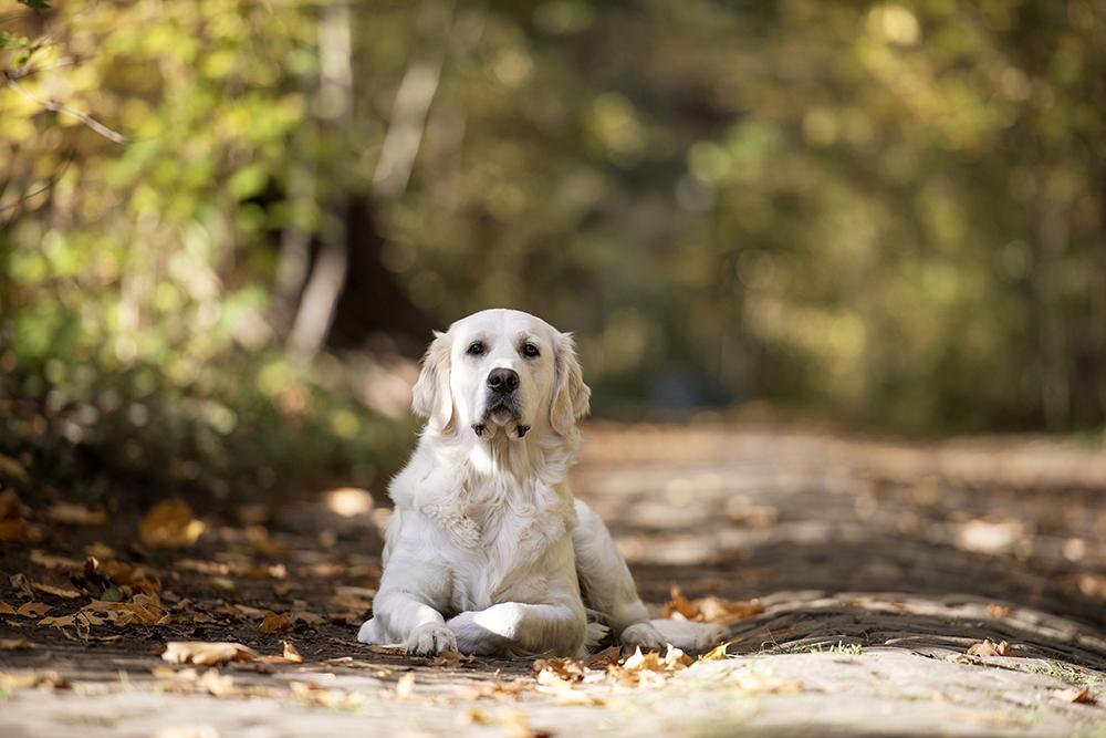 Hond 5.jpg