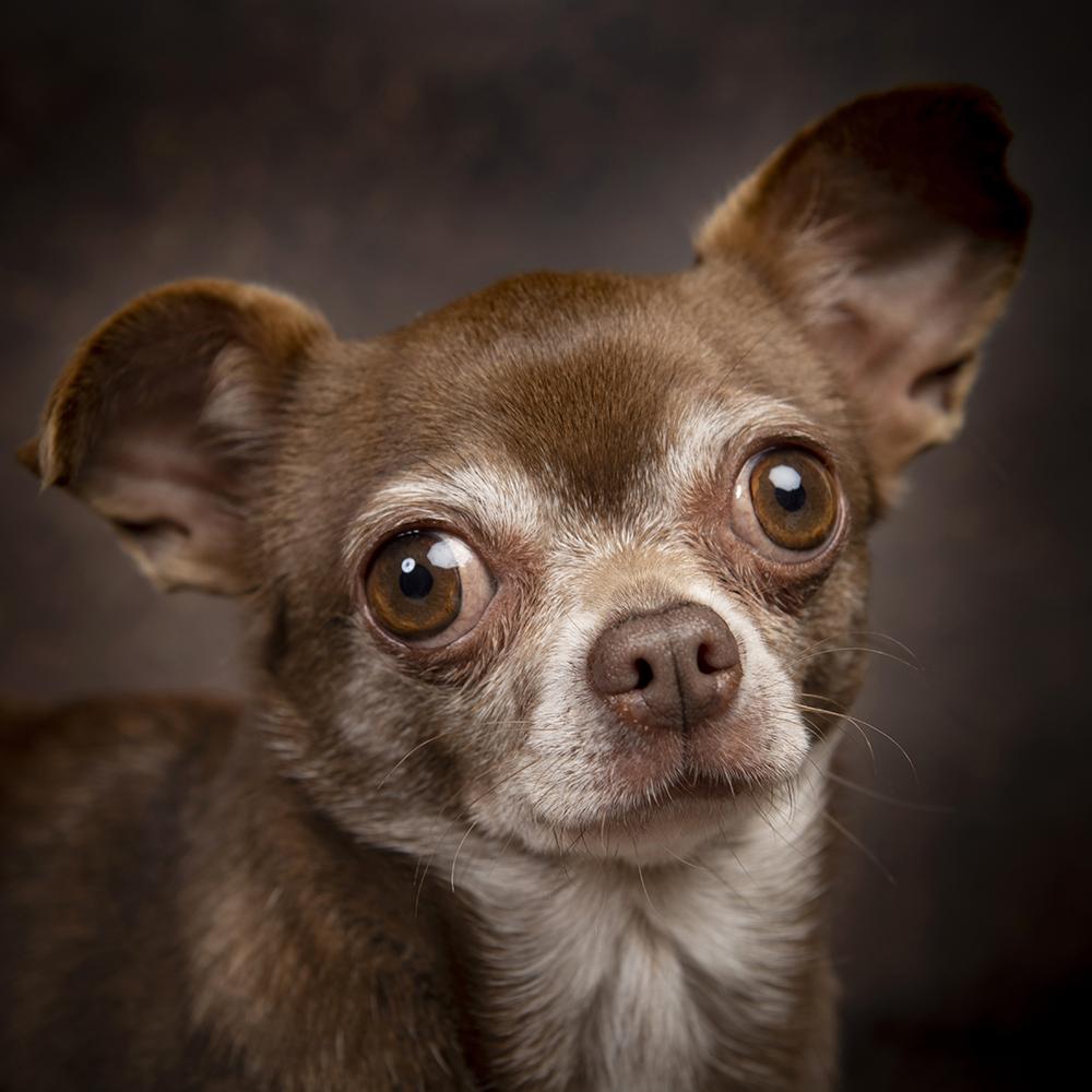 Honden 112.jpg