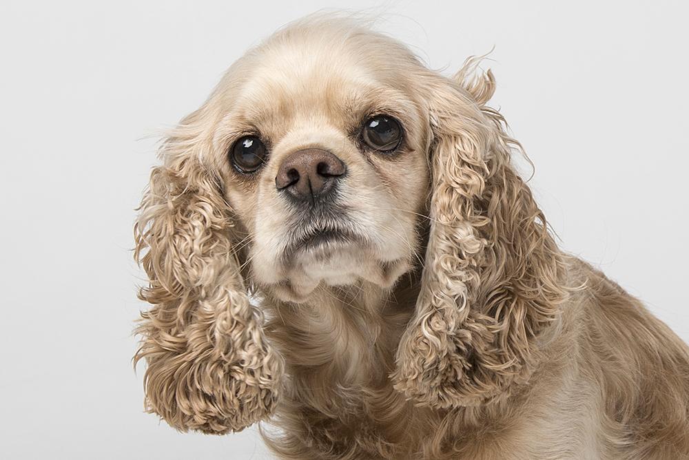 Hondenshoot 1.jpg