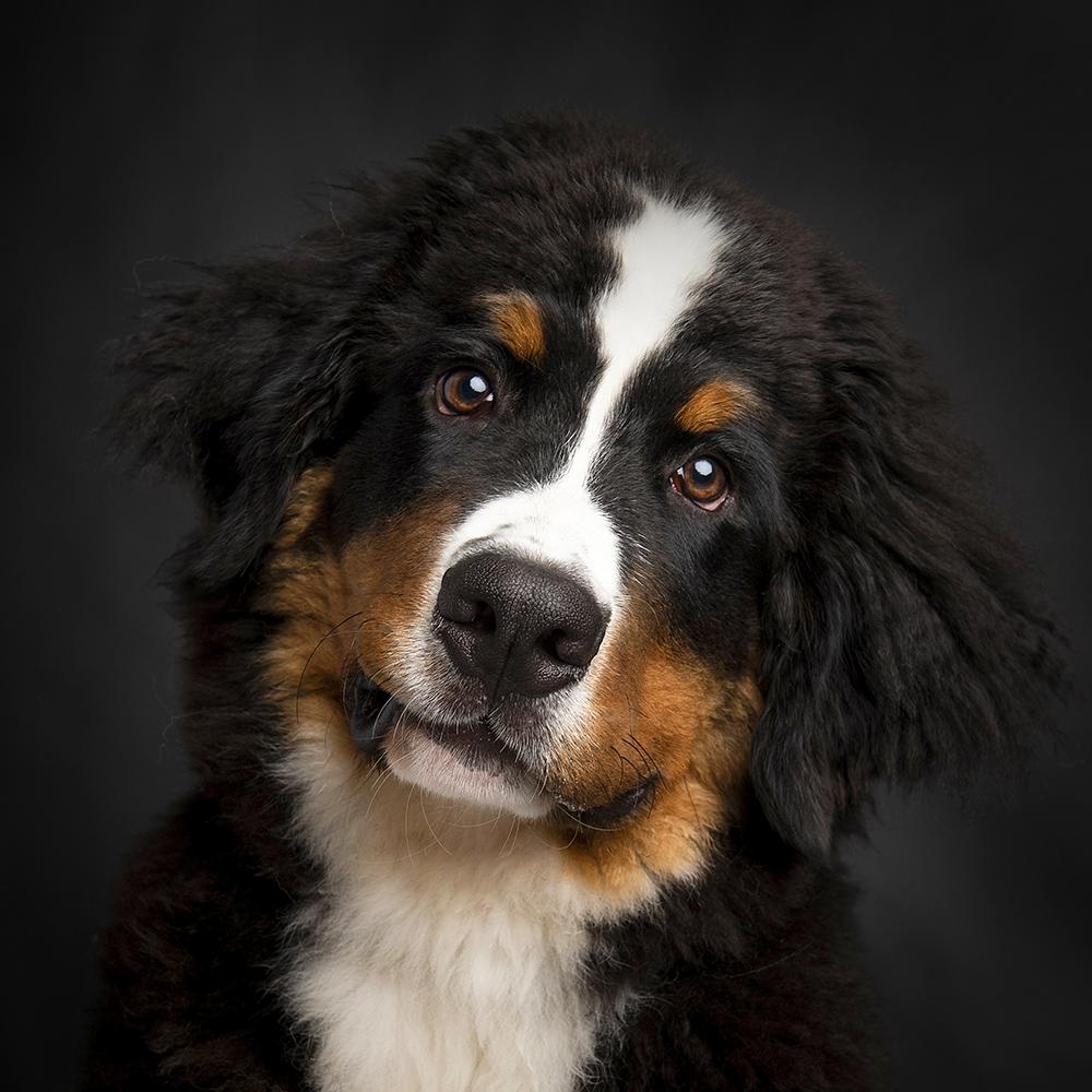Hondenshoot 10.jpg