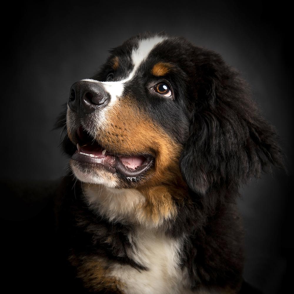 Hondenshoot 11.jpg