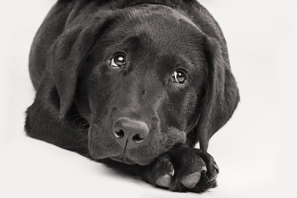Hondenshoot 13.jpg