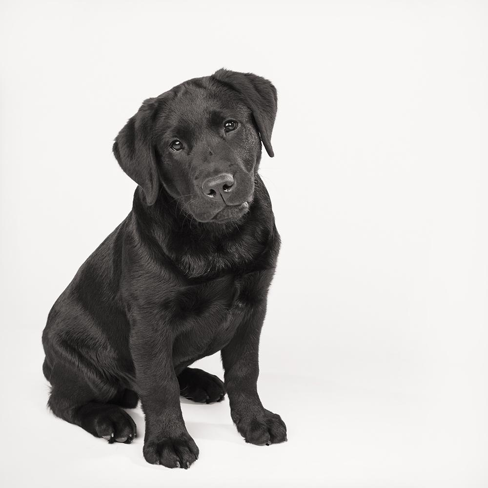 Hondenshoot 14.jpg