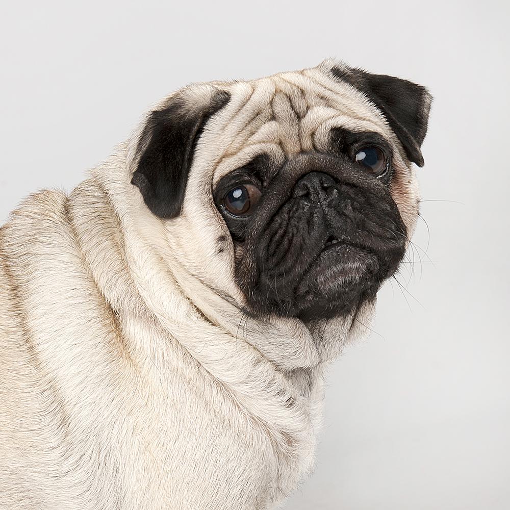 Hondenshoot 15.jpg