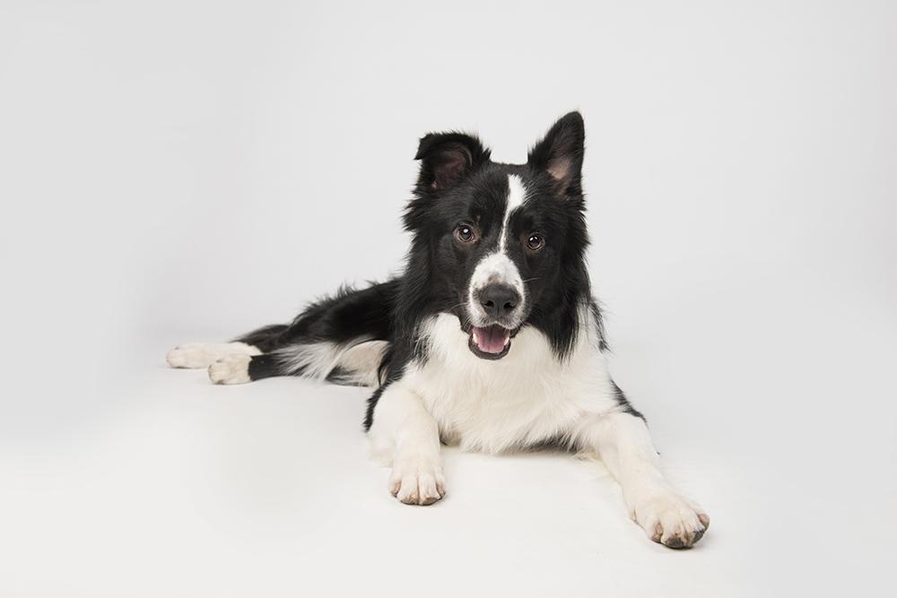 Hondenshoot 7.jpg