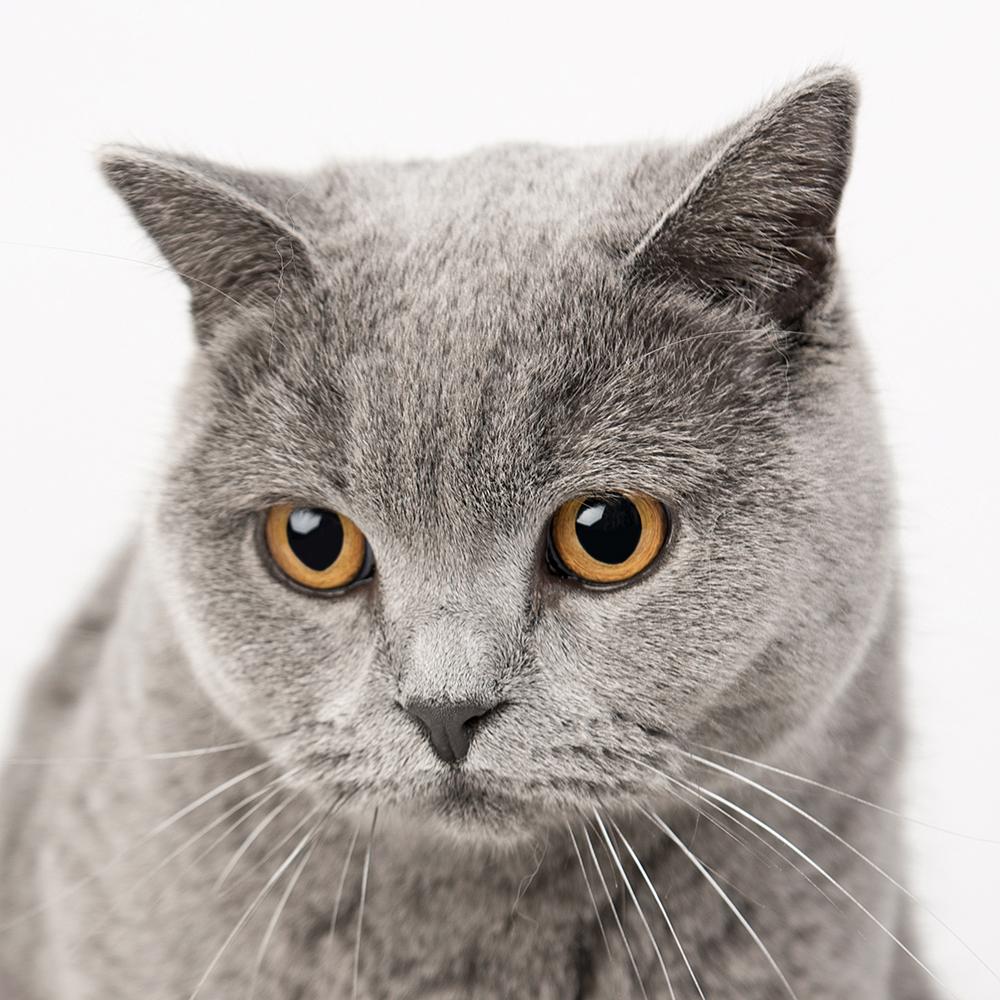 Kattenshoot 1.jpg