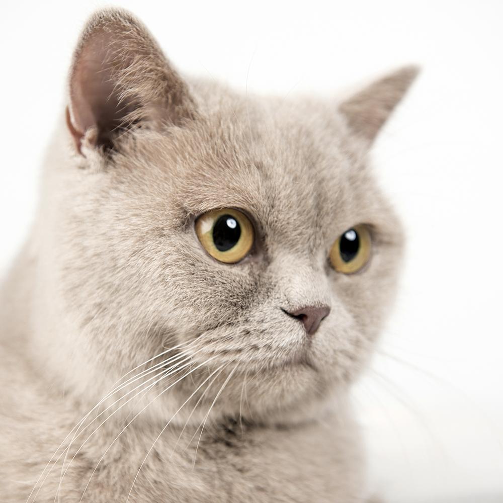 Kattenshoot 2.jpg