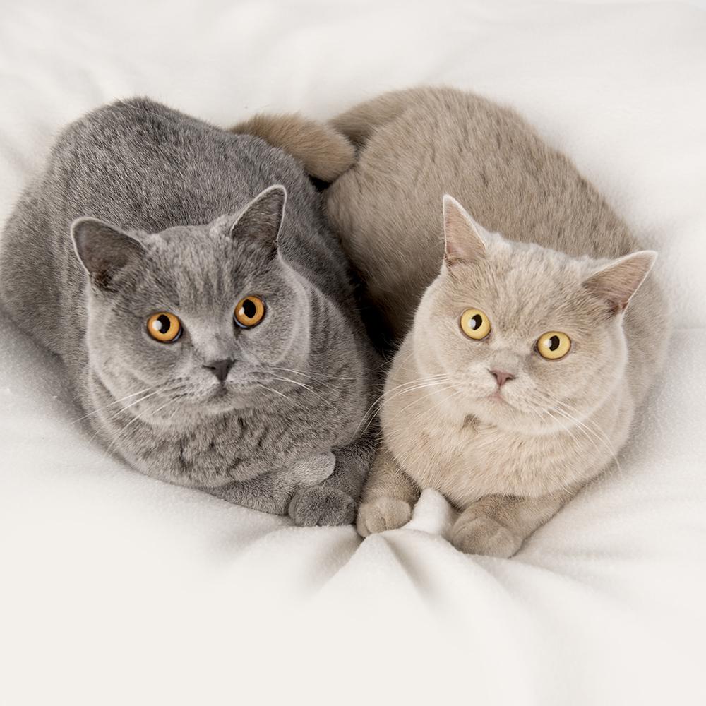 Kattenshoot 3.jpg